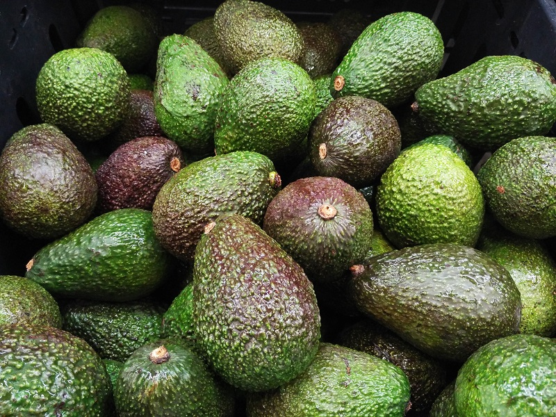 Containers suspected to ferry immature avocados intercepted