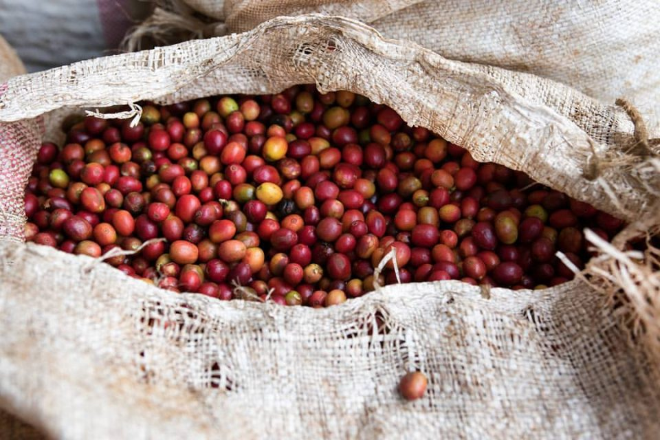 Only registered coffee farmers stand to benefit from Ksh 3B fund
