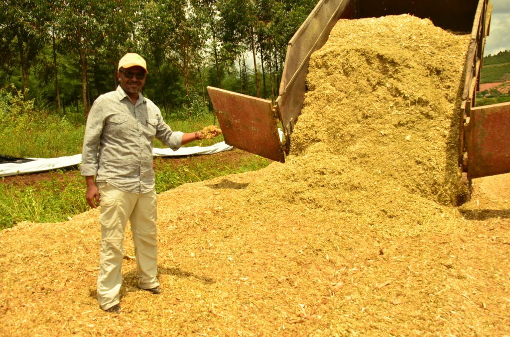 Small-scale farmers turn to silage making to boost returns